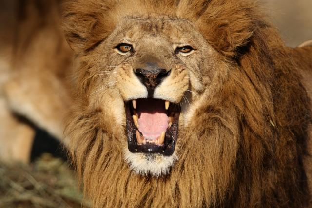 社員教育とライオン
